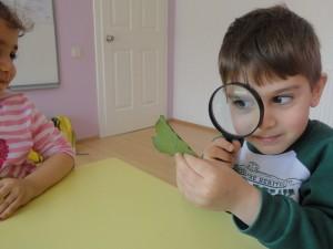 Yaprak ve ağaç kabuklarını inceledik ve yaprak baskısı yaptık.