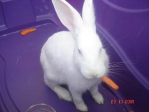 Okulumuzda bir tavşan var