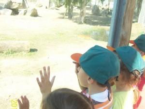 Sasalı Hayvanat Bahçesi;Sevimli Dostlarımızı Tanıdık…